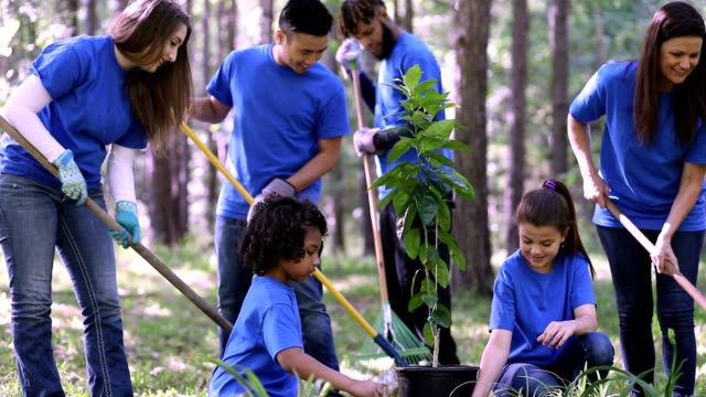 environmental beautification. volunteers plant flowers, tree, plants at park in spring. - sustainability video stock e b–roll