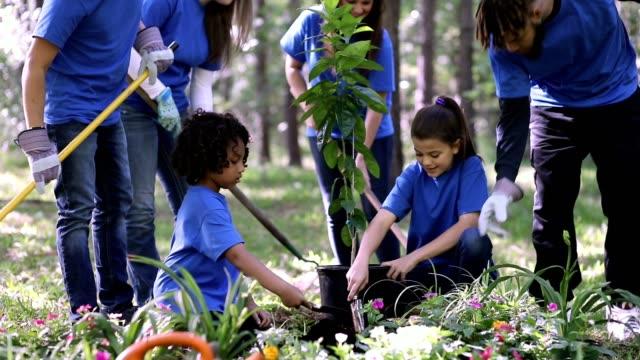 Environmental beautification. Volunteers plant flowers, tree, plants at park in spring. video