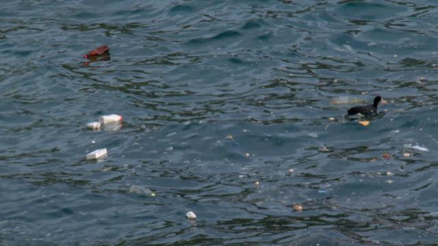 環境の災害 - 水鳥点の映像素材/bロール