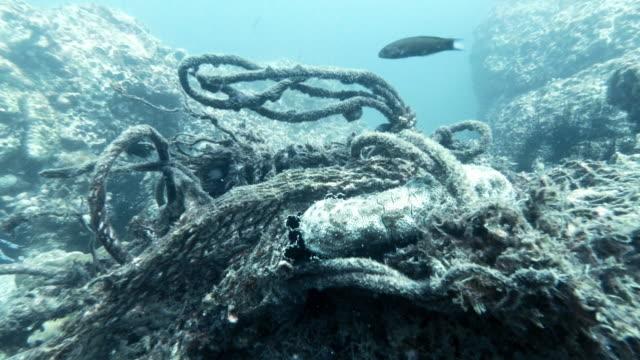 Umweltkatastrophe Meereslebewesen in Unterwasser-Geisternetz gefangen – Video