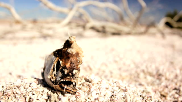 Environmental Drought of a Dry Lake Bed Dried up lake bed with a skeletal fish and brittle white wood resulting from drought conditions animal skeleton stock videos & royalty-free footage