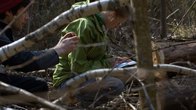 Environmentalists explore felled tree