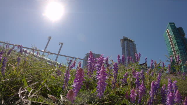 Environmentally Healthy Urban Green Roof 4K UHD video