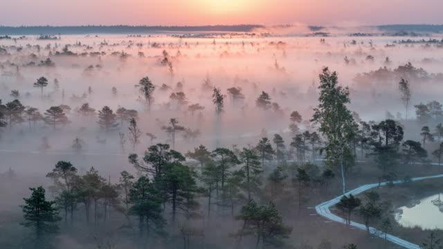 bellissima alba time lapse in una nebbia parco nazionale delle zone umide - lettonia video stock e b–roll