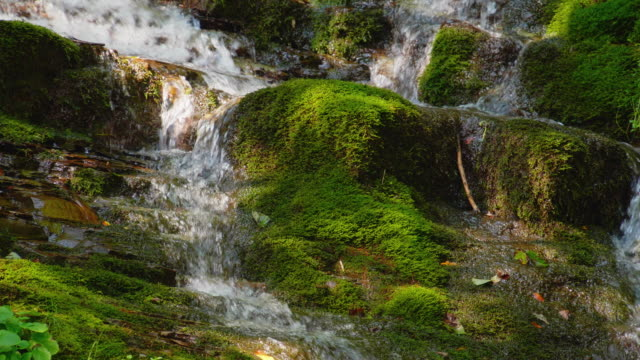 epic waterfall in the summer forest. stream - muschio flora video stock e b–roll