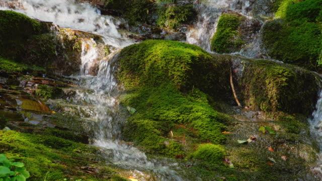episka vattenfall i skogen sommaren. stream - torv bildbanksvideor och videomaterial från bakom kulisserna