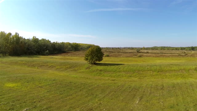 Equal green meadow and tree. Aerial  shot in sunny day video