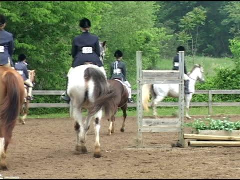 equestrian - hästhoppning bildbanksvideor och videomaterial från bakom kulisserna