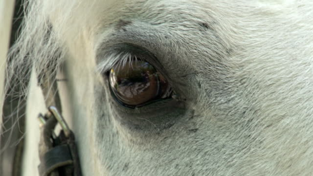 Equine Eye video