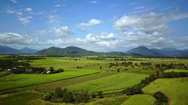 erial footage of sugar cane fields at yorkeys knob, near cairns, queensland, australia. august 2018. - canna da zucchero video stock e b–roll