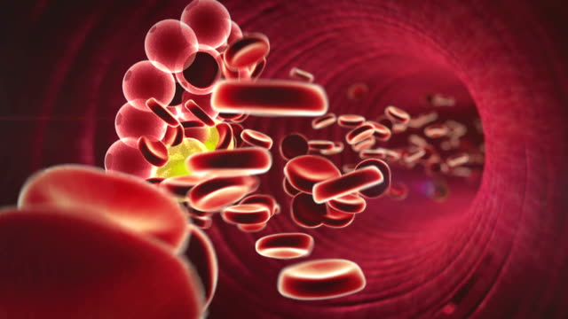 erythrocyte, cholesterol fat cell and erythrocyte in the blood, inside the blood vessel,  High quality 3d render of blood cells, cholesterol in a blood blood clot stock videos & royalty-free footage