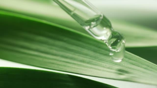 yeşil yapraktan uçucu yağ damlası - doğal koşul stok videoları ve detay görüntü çekimi