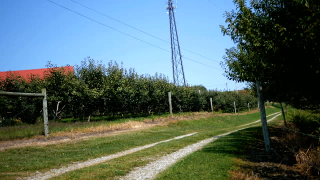 Establishing shot of a country road beside an apple orchard in the country