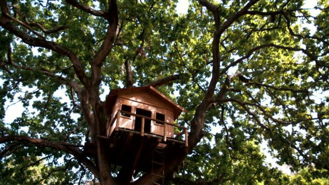 Establishing shot of big tree house in an oak tree video