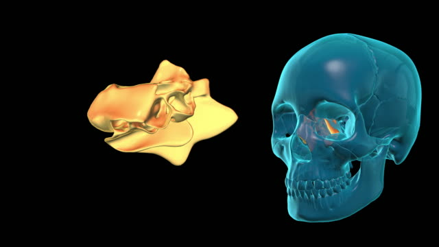 Ethmoid Bone video