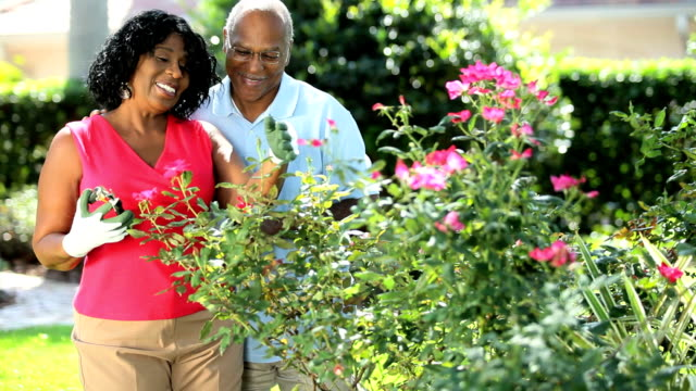 Ethnic mature couple with gardening tools pruning plants video