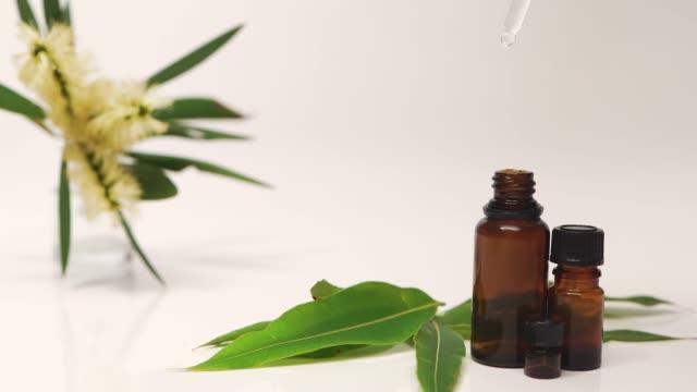 eukalyptusolja färskhet 100% ren eterisk olja droppe släppa med vit rygg marken eukalyptus blomma - eucalyptus leaves bildbanksvideor och videomaterial från bakom kulisserna
