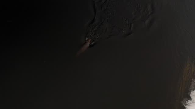 stockvideo's en b-roll-footage met euraziatische otter (lutra lutra) zwemmen, wit-rusland - eén dier