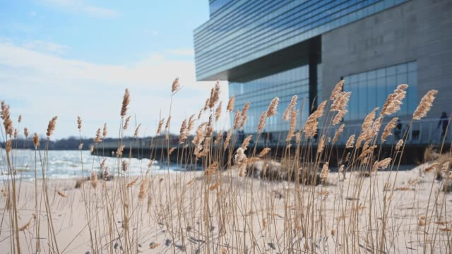 Evanston, IL / USA - March 08 2020: Tall grass blowing on beach along Lake Michigan on Northwestern University campus