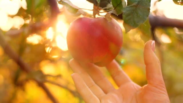 Eve Pick an Apple