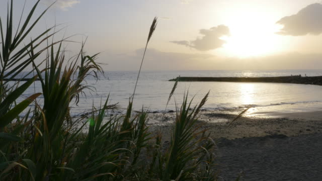 evening beach panorama and tropical plants - cespuglio tropicale video stock e b–roll