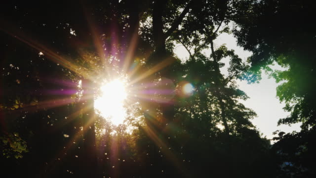 abends im wald - die sonne scheint durch die äste der bäume, die midge fliegt im vordergrund - baumgruppe stock-videos und b-roll-filmmaterial