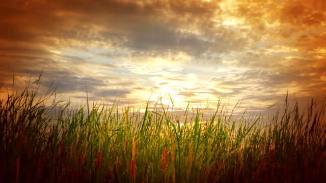 Evening nature video