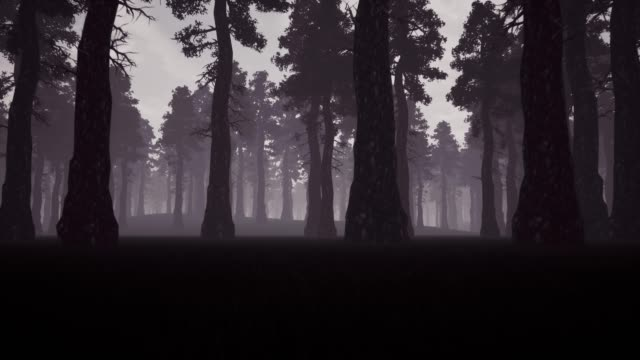 Evening spooky forest 3d realistic footage. Moving through coniferous woods perspective view animation. High trees and early morning mist. Creepy location movement monochrome video