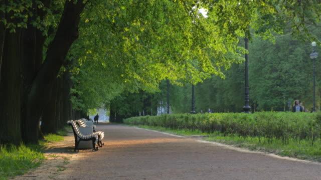 夕方の夏の公園。ベンチ。地球の道緑の木。光線 - ベンチ点の映像素材/bロール