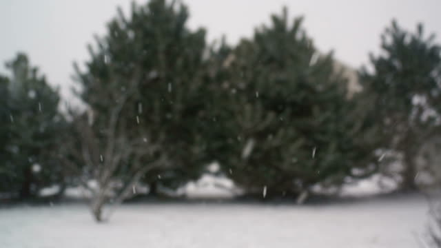 Evergreen Trees Out of Focus in Snow Storm video