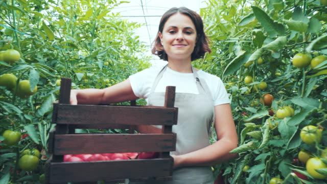 vídeos de stock e filmes b-roll de every day i deliver fresh tomatoes. - colher atividade agrícola