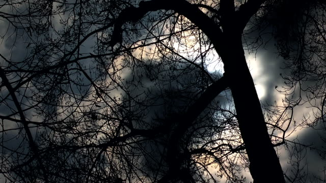 evil tree - trees in mist stock videos & royalty-free footage