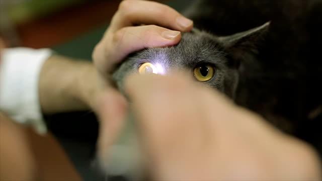試験獣医師ステーション内の猫の目 - ネコ科点の映像素材/bロール
