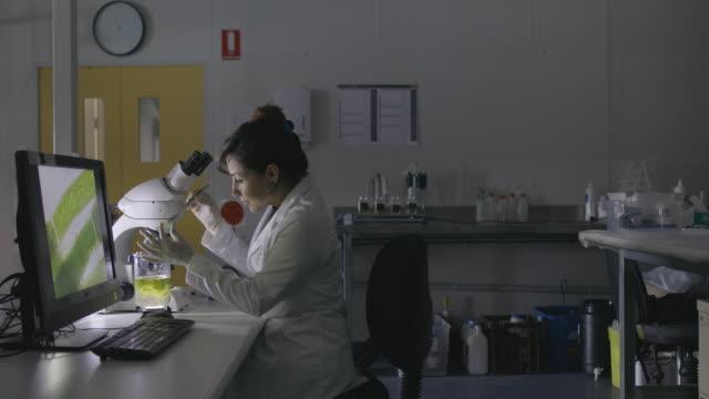 examining a sample - мембрана клетки стоковые видео и кадры b-roll