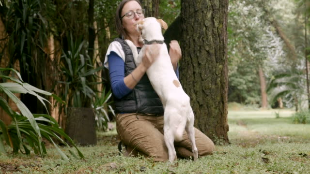 Excited dog licking the face of her happy female owner Excited mixed breed mutt dog licking the face of her happy smiling woman owner outside off leash in a part tail stock videos & royalty-free footage