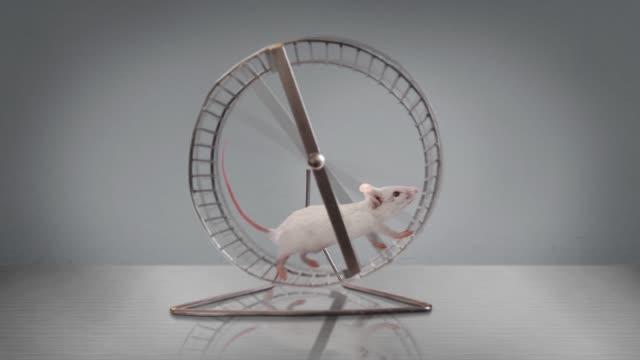exercising rodent running in a wheel - sztuka i rzemiosło wytworzony przedmiot filmów i materiałów b-roll