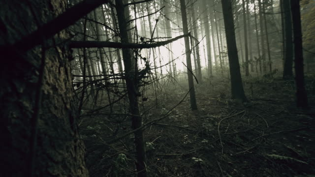 POV Exhausted man walking in the forest POV shot of exhausted frightened unrecognizable man walking like he would be lost in the deep dark forest. Shot includes original sound. Also available in 4K resolution. lost stock videos & royalty-free footage