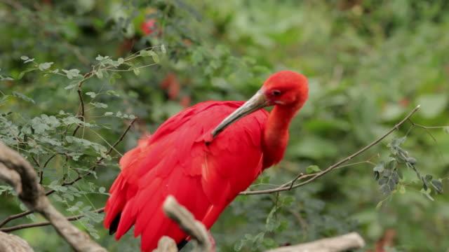 exotische vogel - tropischer baum stock-videos und b-roll-filmmaterial