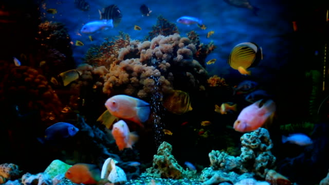 exotic fishes in an aquarium - vivid 4k video stock videos & royalty-free footage