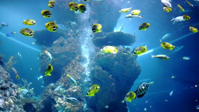 エキゾチックな海の魚黄色、青と白の色はサンゴ礁の間を泳ぐ。 - 魚点の映像素材/bロール