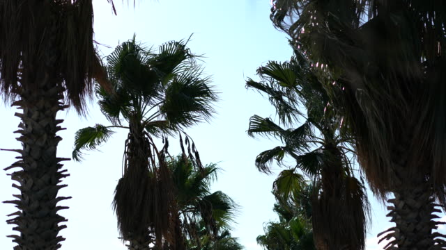 Exotic palm trees  against blue sky background