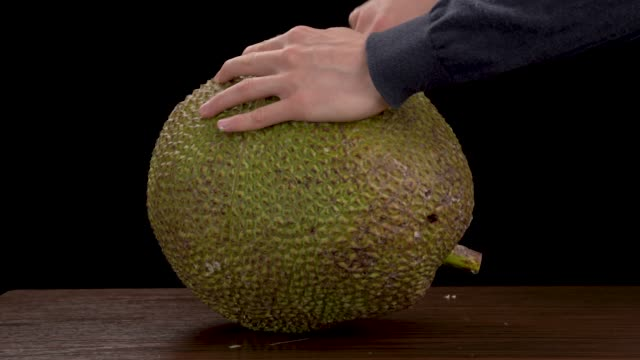 stockvideo's en b-roll-footage met exotische tropische hard groen gepelde nangka. close-up demonstratie van kathal fruit cross cut - tropisch fruit