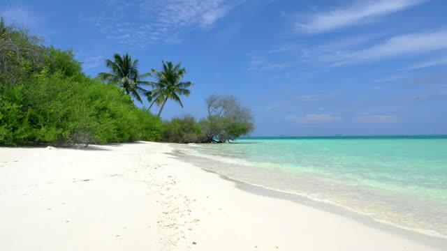 Exotic white sand beach in Maldives island video