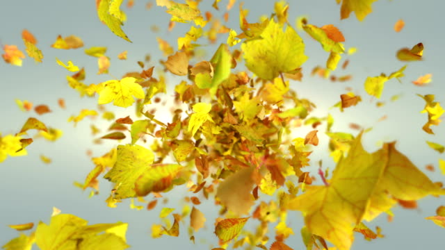 exploding autumn leafs background - ноябрь стоковые видео и кадры b-roll