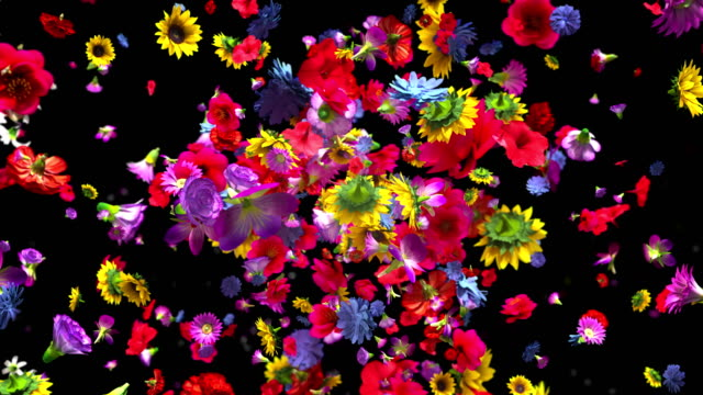 exploding colorful flowers in 4k - fiori video stock e b–roll