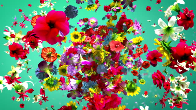 Exploding colorful flowers in 4K High quality exploding colorful flowers in 4K floral pattern stock videos & royalty-free footage