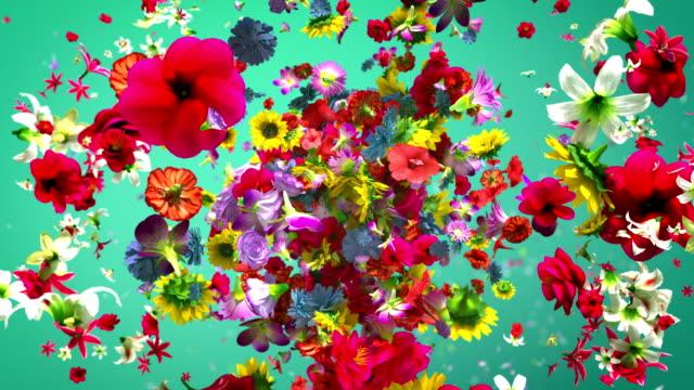 exploderande färgglada blommor i 4k - blommönster bildbanksvideor och videomaterial från bakom kulisserna