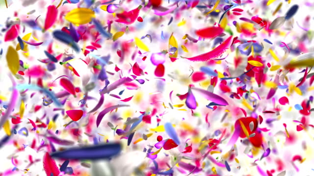 Exploding flower Petals in 4K High quality animation of exploding flower Petals in 4K floral pattern stock videos & royalty-free footage