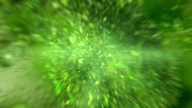 exploderande grönt te blad i 4k - blommönster bildbanksvideor och videomaterial från bakom kulisserna