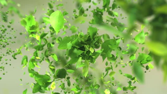vidéos et rushes de explosion de thé vert feuilles en 4k - plante aromatique